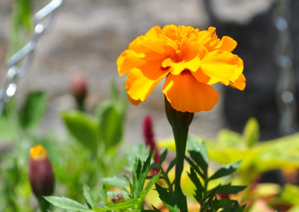 flower pots 048