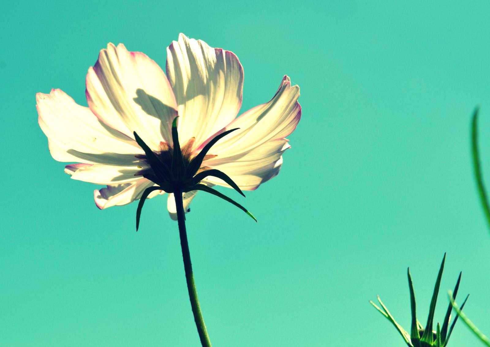 flower pots 023