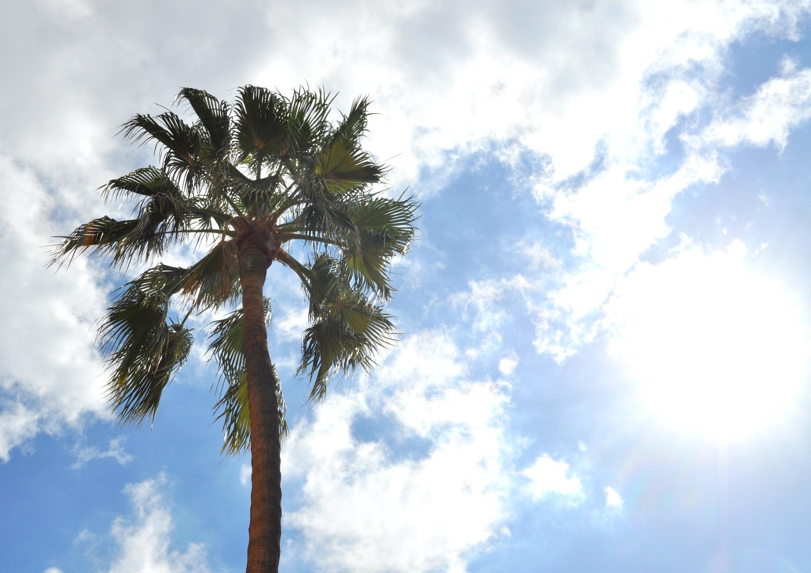 Mallorca 321